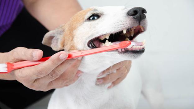 dog dental hygiene tips from hometown animal hospital in prineville oregon